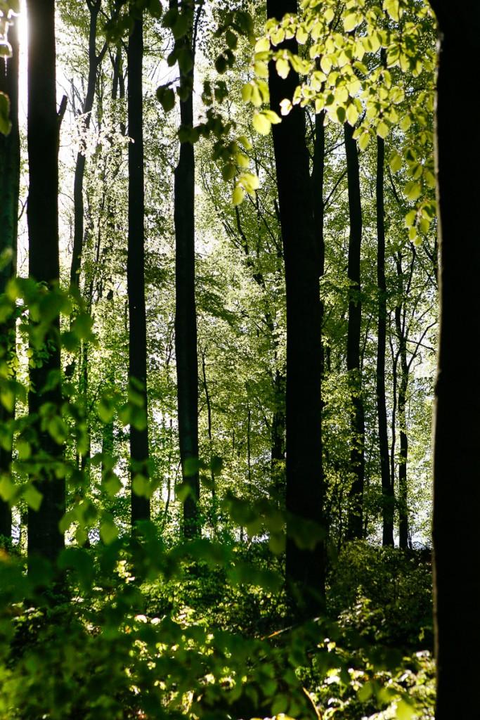 PG_woods1_04