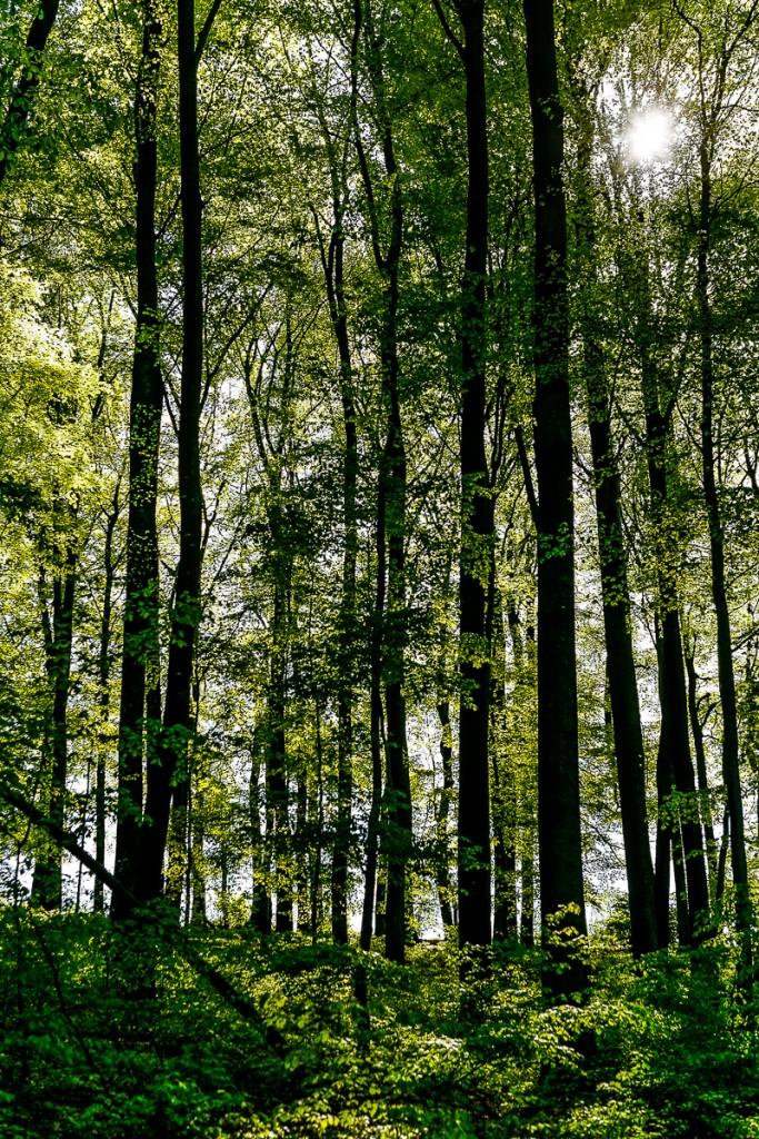 PG_woods1_05