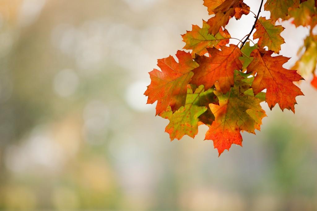 PG_leafs09_01