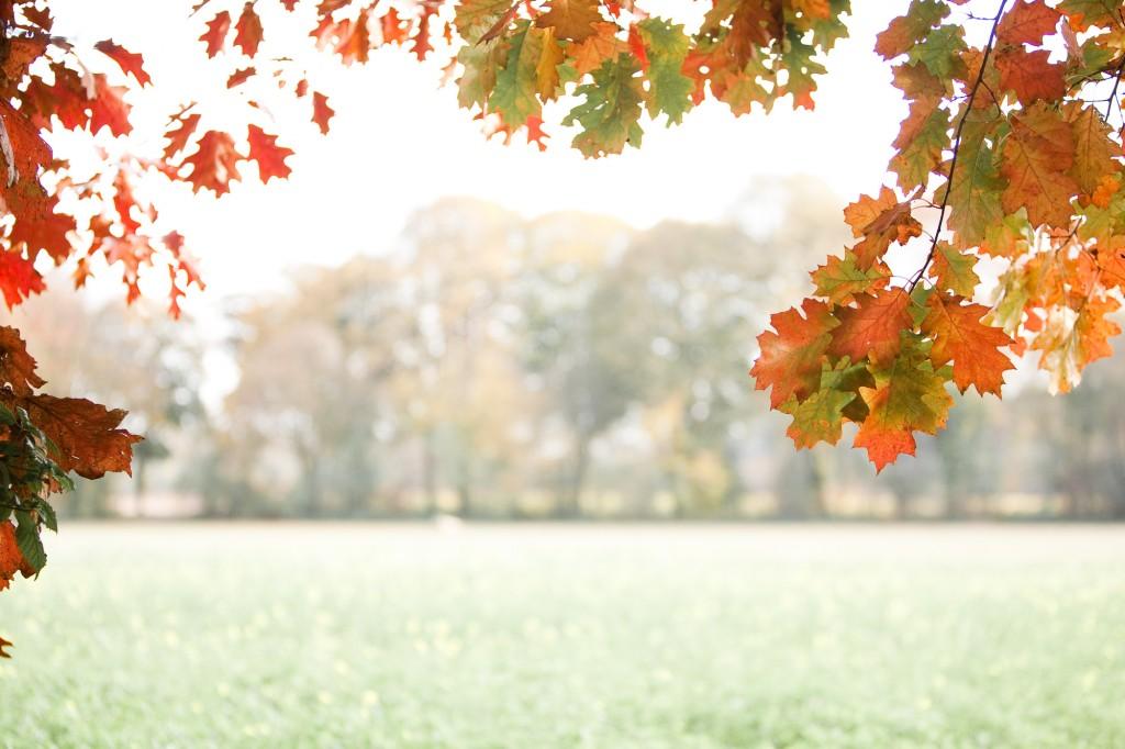 PG_leafs09_02