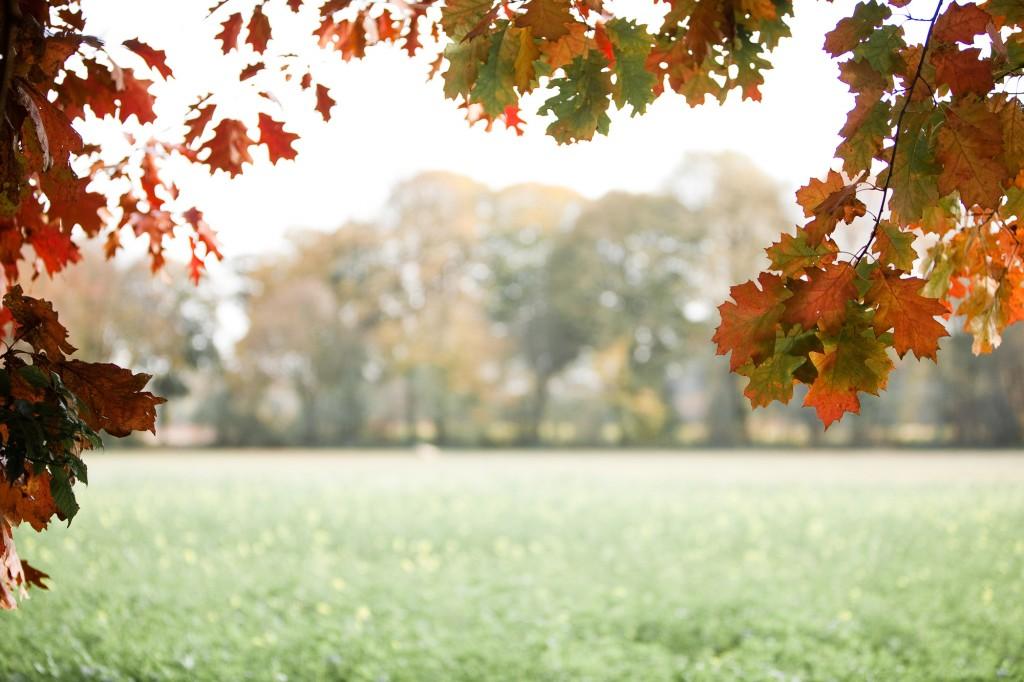 PG_leafs09_03