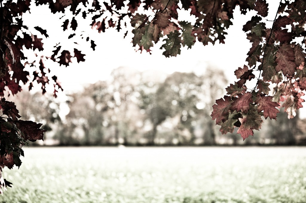 PG_leafs09_04