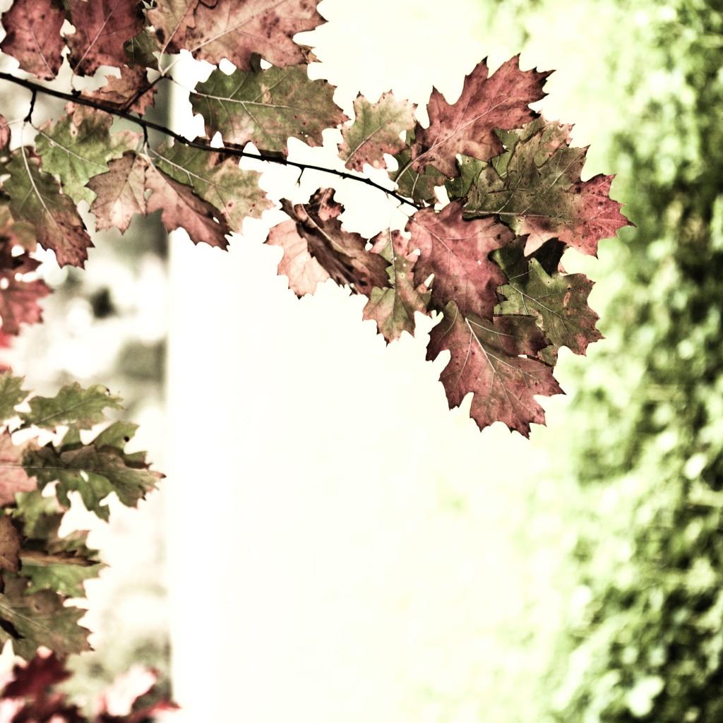 PG_leafs09_05