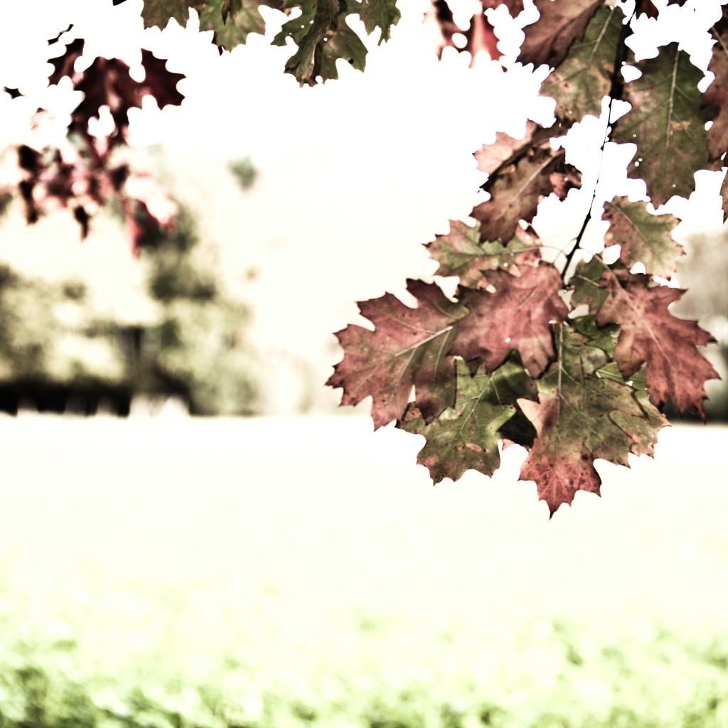 PG_leafs09_06