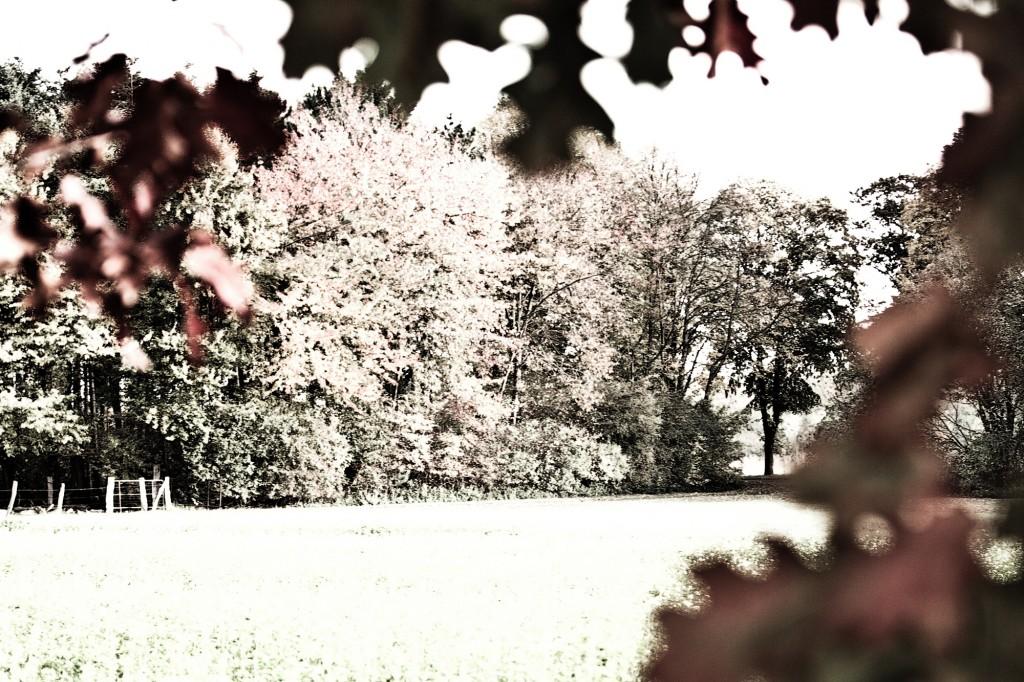 PG_leafs09_07