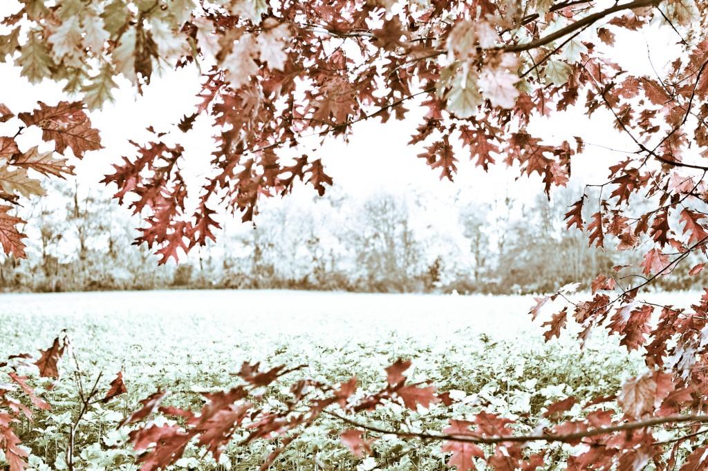 PG_leafs09_08