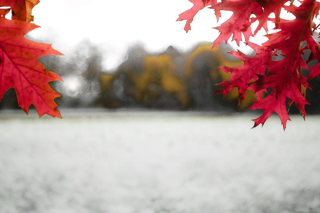 PG_leafs09_09