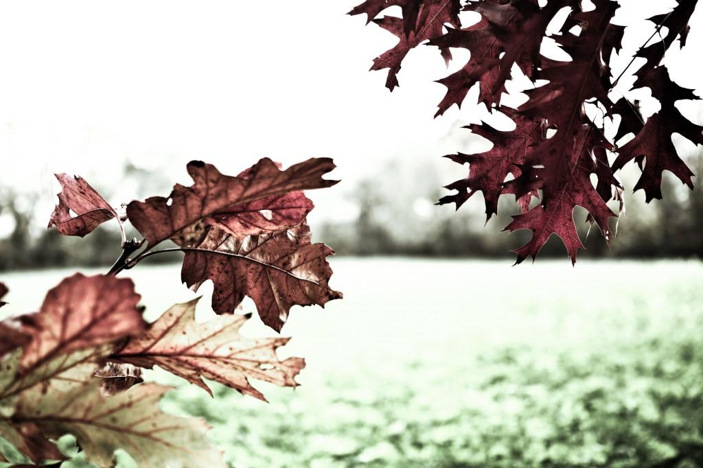 PG_leafs09_10
